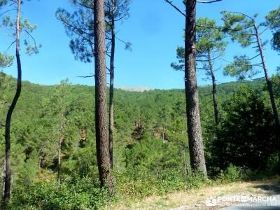 Pinares Angostura, Piedralaves; excursiones y senderismo;viajes fin de semana;senderistas